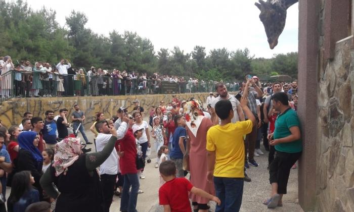 Hayvanat Bahçesi, 500 bin kişiyi ağırladı